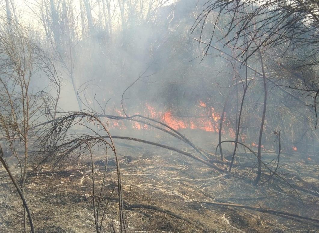 Danno fuoco alle sterpaglie e s'incendia il bosco, denunciati due avellinesi